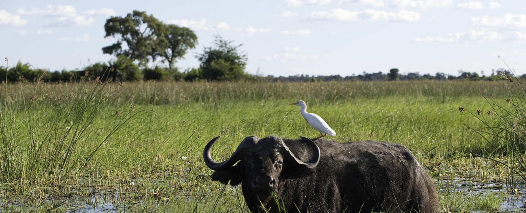 Luxusreise Afrika 2 SvS Travel