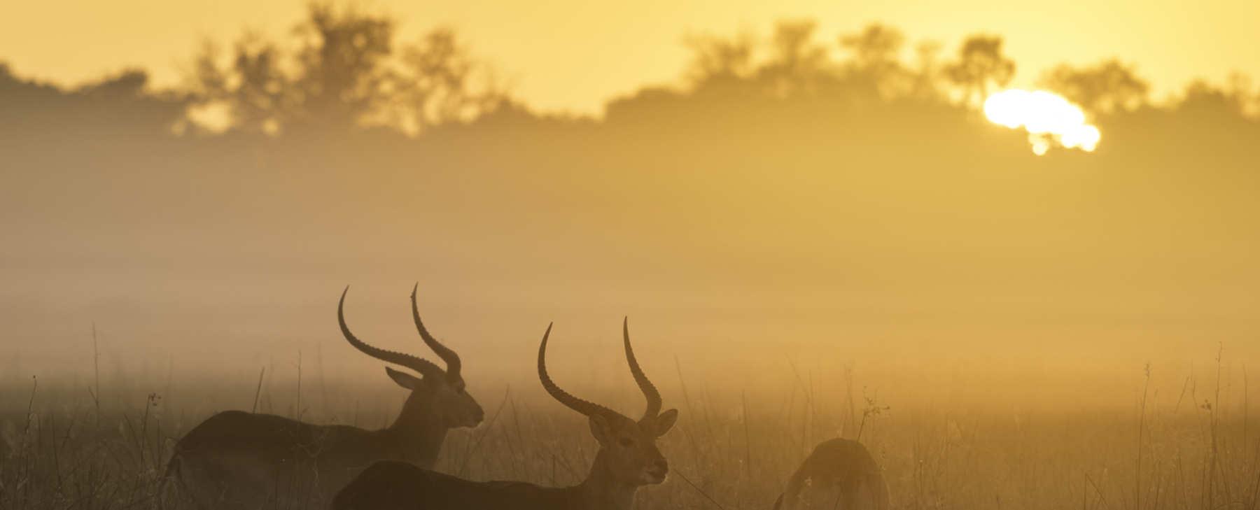 Luxusreise Afrika 5 SvS Travel