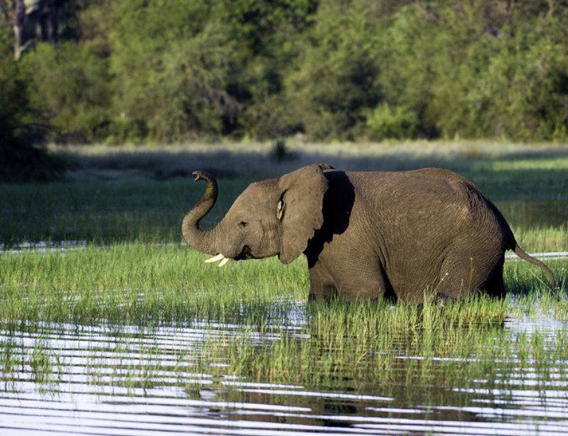 Luxusreisen & Luxussafari in Afrika Safari