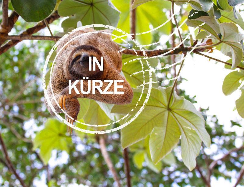 Luxusreise Costa Rica Aktiv Kachel in Kürze 1