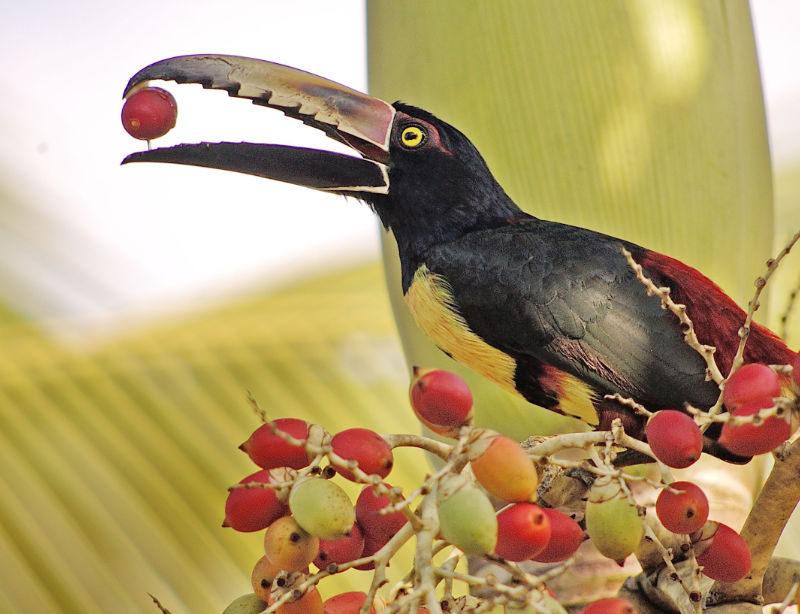 Luxusrundreise Costa Rica Intensiv