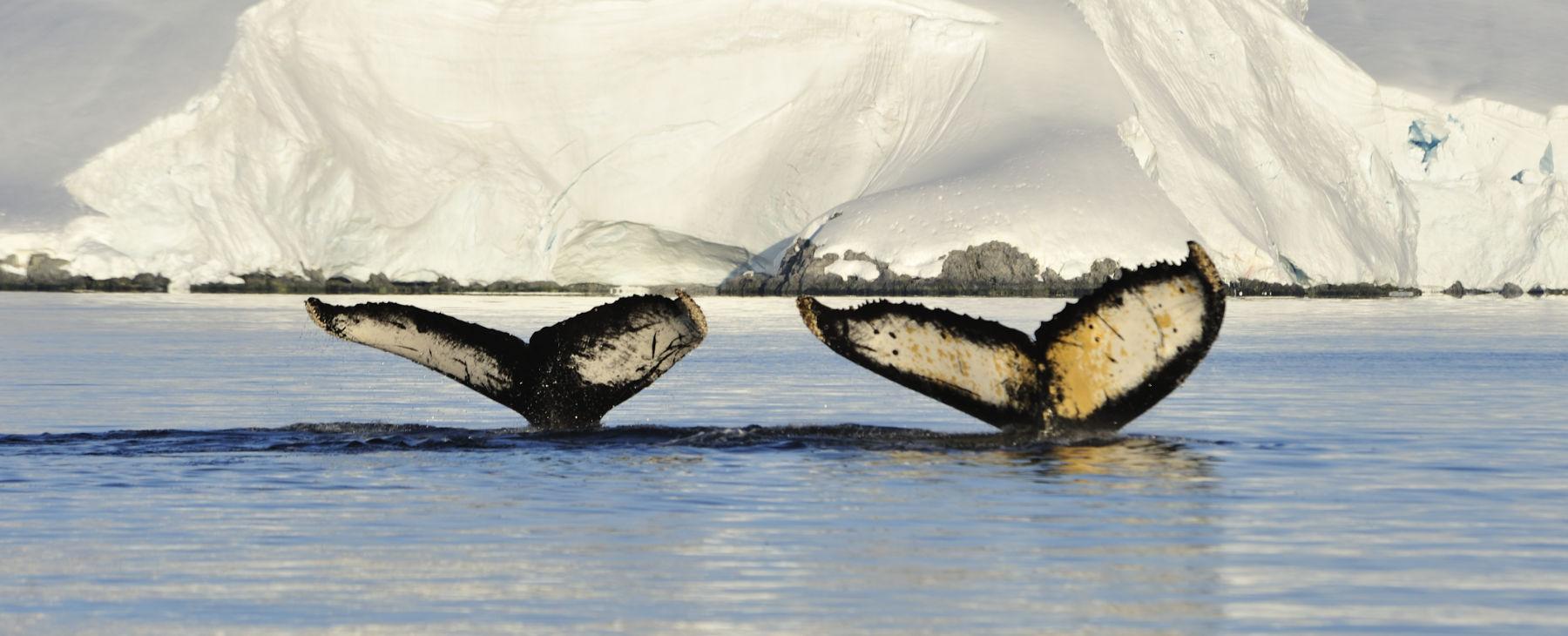 Luxusreise Antarktis