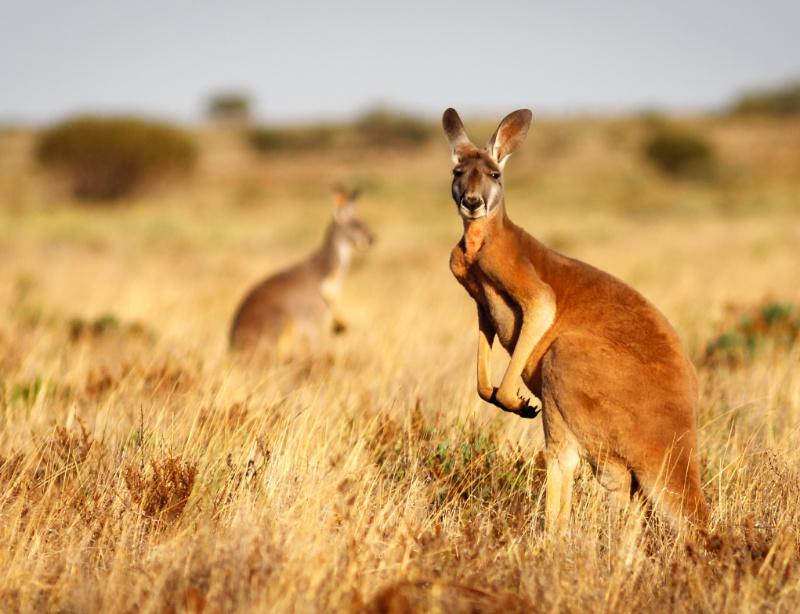 Luxusreise Australien & Neuseeland Luxusurlaub