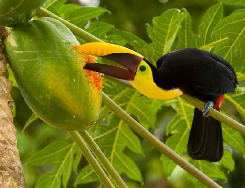 Luxusrundreise Costa Rica Höhepunkte