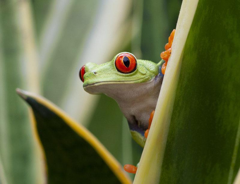 Luxusrundreise Costa Rica Naturparadies Kachel 1