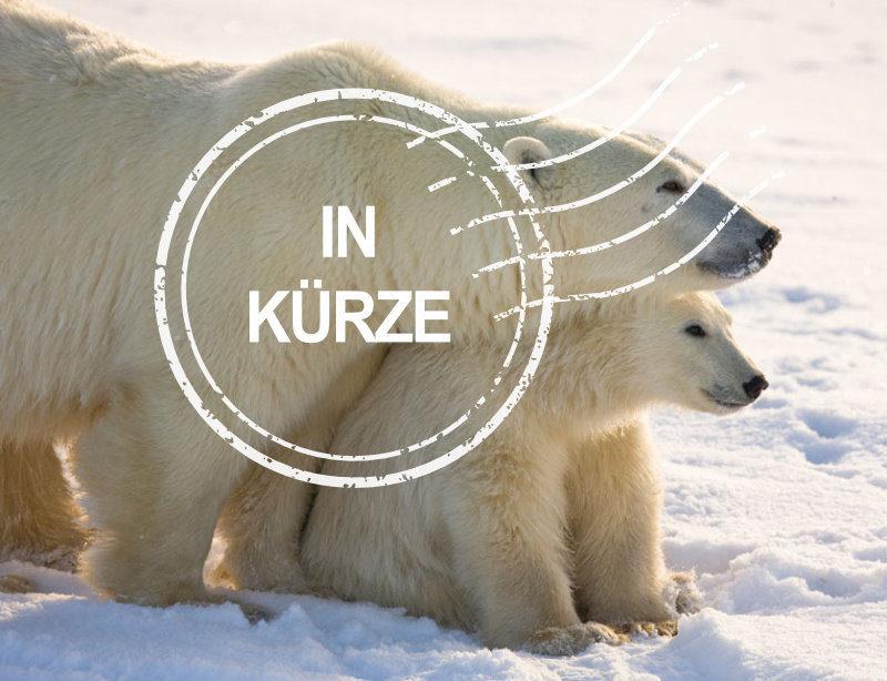 Luxusrundreise Kanada Churchill Lodges Eisbär Kachel in Kürze