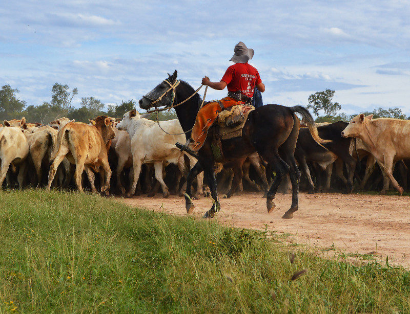 Luxusrundreise Paraguay Kompakt Kachel